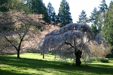 arboretum01.JPG